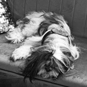 Maestoso Leather Dog Harness